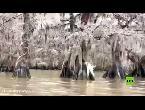 شاهد مشاهد سريالية للأشجار المجمدة في ولاية لويزيانا الاستوائية