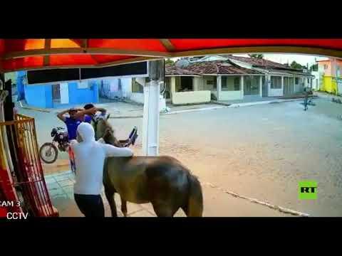 شاهد لصا نينجا يسرقان متجرًا على ظهر حصان في البرازيل