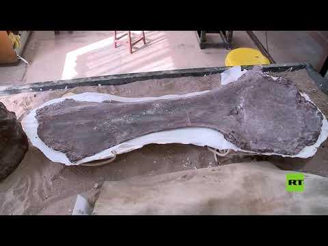 شاهد اكتشاف أقدم أحفورة تيتانوصور على الإطلاق في الأرجنتين